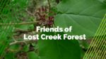 Friends of Lost Creek Forest